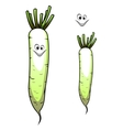 Fresh whole parsnip with a sweet smile vector image vector image