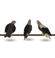 set silhouettes fast living dangerous eagle vector image