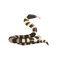 california king snake with black and white bands vector image
