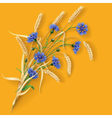 Cornflowers and wheat ears vector image vector image