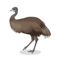 emu bird full length portrait isolated on white vector image