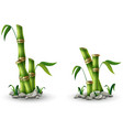 green bamboo stems with leaves isolated on white b vector image