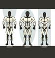 men body types diagram with three somatotypes vector image
