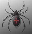 Black spider with red cross on back vector image vector image