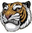 ferocious tiger roars vector image