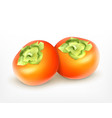 fresh juicy persimmon vector image vector image