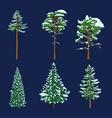 set winter cartoon pin trees cedar and spruce vector image vector image