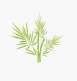 bamboo tree logo vector image vector image