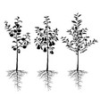 seedling young fruit trees with roots set vector image vector image