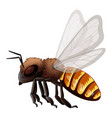 flying bee on white background vector image