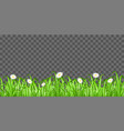 grass and flower on transparent background vector image vector image