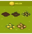 SET 6 Isometric Stage of growth Melon vector image vector image