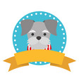 pet dog ribbon label emblem vector image