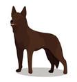 australian kelpie dog vector image vector image