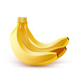 realistic bunch of bananas vector image vector image