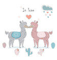 cute alpaca couple for valentines day and love vector image