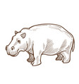 african hippo or hippopotamus isolated sketch vector image vector image