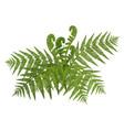 bush green wide open leaves fern vector image