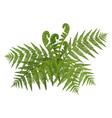 Bush of green wide open leaves of fern