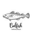 codfish vector image