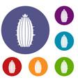 mammillaria bocasana icons set vector image
