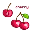 Stylized of fresh cherry on white vector image