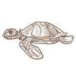 turtle or tortoise isolated sketch underwater vector image vector image