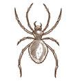 arachnid or spider isolated sketch tarantula or vector image