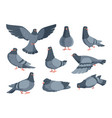 cartoon dove funny pigeon characters flying vector image vector image
