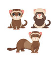 ferret polecats in cartoon style funny emoji vector image