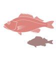 Ocean Perch vector image
