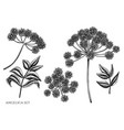 set hand drawn black and white angelica vector image