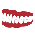 dentures with white teeth vector image