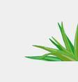 Aloe vera medicinal eco plant