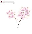 Sakura or Cherry Blossom vector image vector image