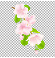 apple tree flowers vector image vector image