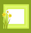 greeting card with framing daffodil narcissus vector image vector image