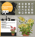 template for indoor plant chrysanthemum tipical vector image