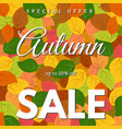 background with autumn leaves and autumn sale vector image vector image