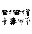 flowers silhouettes set of wild forest and garden vector image