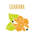 Guarana vector image vector image