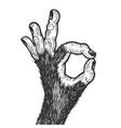 monkey hand ok gesture sketch engraving vector image
