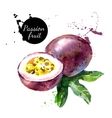 Hand drawn watercolor painting on white background vector image