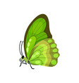beautiful green flying butterfly insect vector image
