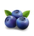 blueberry isolated realistic on white background vector image vector image
