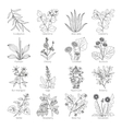 Medicine plants and herbs collection vector image