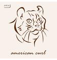 American Curl vector image