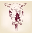 cow skull hand drawn llustration realistic vector image