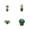 isometric flower set of flowerpot houseplant vector image