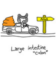 metaphor function of large intestine or colon vector image